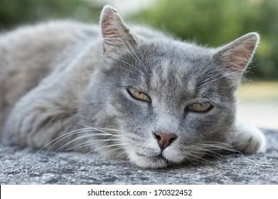 Gray catcat