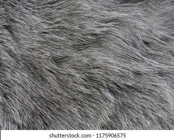 Gray cat's fur as a background