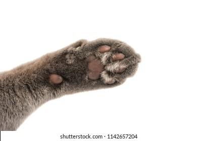 gray cat's paw isolated on white background