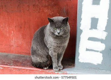 "gray city cat ""HE"""