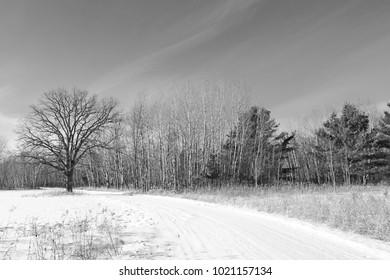 Gray, cold, snowy, lifeless winter day
