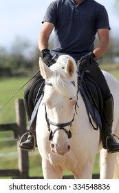 Gray colored stallion galloping with unknown rider
