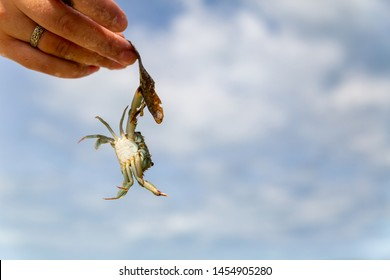 gray crab caught claws and hangs on a stick held by a female hand against the sky with copy space