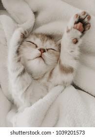 gray cute little kitten on white background