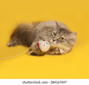 Gray fluffy cat with toy lies on yellow background