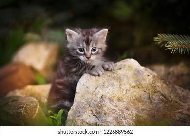 Gray fluffy kitten on summer outdoor stones