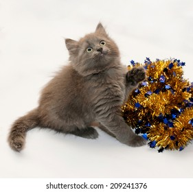 Gray fluffy kitten sitting looking up with Christmas garland on white background