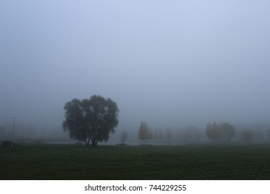 Gray fog in a park with trees