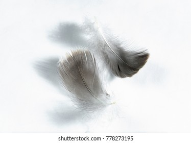 gray goose feathers and down on a light background