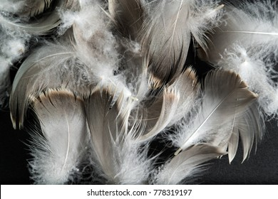 gray goose feathers and down on a dark background
