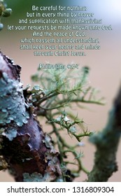Gray Green Tree Lichen and Bible Verse