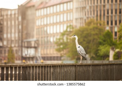 a gray heron standing on an embankment railing somewhere in the city against buildings