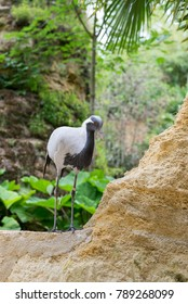 Gray heron stands on a rock