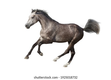 Gray horse cutout on white background