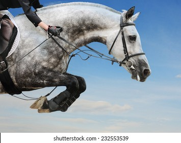 Gray horse in jumping show against blue sky