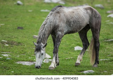 gray horse on the grass