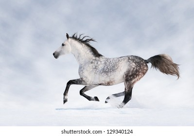 Gray horse running in the snow