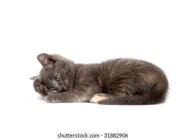 A gray kitten begins to shield its eyes while laying down