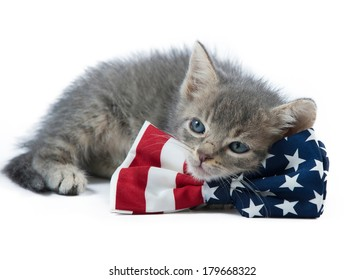 A gray kitten with blue eyes lies on table, resting its head on a red, white, and blue patriotic bow tie; uses bow tie as a pillow
