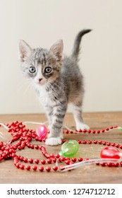 Gray Kitten with Christmas Decorations