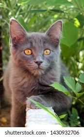 Gray kitten in the country