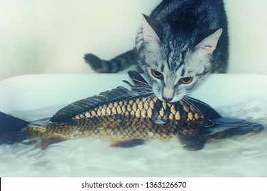 Gray kitten hunts big fish. Little cat trying to catch carp. Prey the predator can not handle. The funny pet is trying to pull the fish out of the water