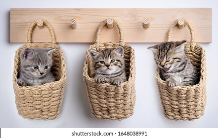 gray kitten inside basket on woden coat rack