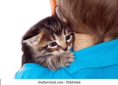 Gray kitten on boy's shoulder, isolated on white