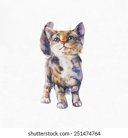 Gray kitten on a white background. Watercolor illustration.