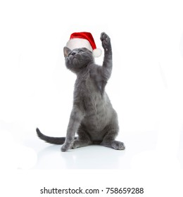 Gray kitten on a white background in Santa's red cap with raised paw