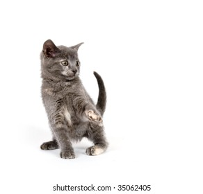 Gray kitten playing and jumping on white background