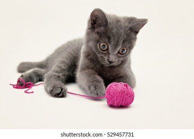 Gray kitten playing with pink clew isolated.