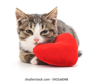 Gray kitten and red heart isolated on a white background.