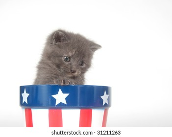 A gray kitten sits inside of a flowerpot with patriotic colors