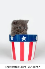A gray kitten sits inside a red white and blue flower pot for memorial day or fourth of july