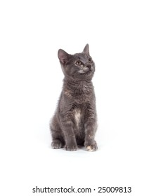 A gray kitten sits on a white background and looks to the right