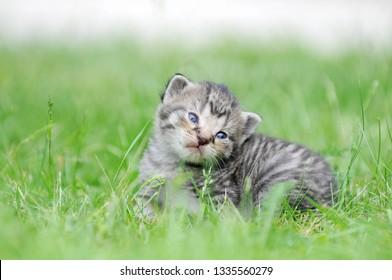 gray kitten sitting on meadow