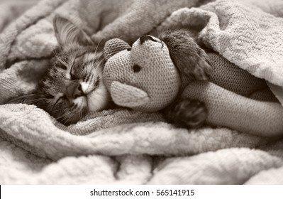 gray kitten sleeping on gray plaid wool blanket with tassels, embracing soft knitted toy