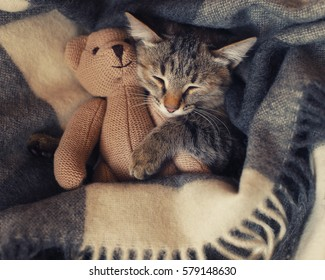 gray kitten sleeping on gray plaid wool blanket with tassels, embracing soft beige knitted toy