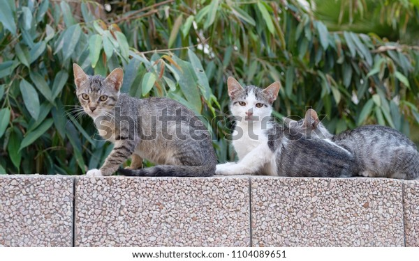 gray little kittens on the street looking at the camera