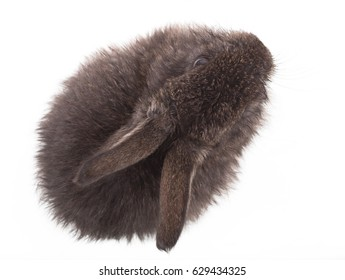 Gray little rabbit on white isolated background