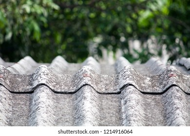 gray old tiles roof with mango tree backgroud