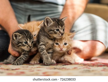 Gray and ore kittens in the hands on the floor. Soft focus