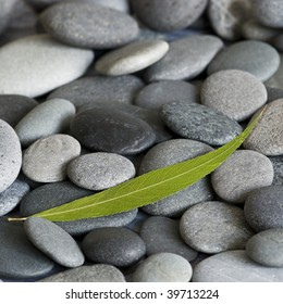 gray pebble with green leaf