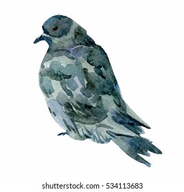 gray pigeon, watercolor drawing on a white background