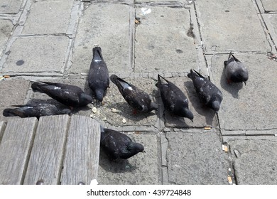Gray pigeons eating food on the stone city pavement