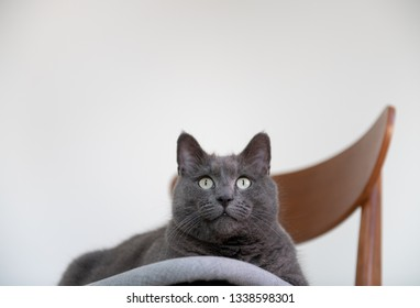 Gray Plush Cat Hanging Out on Chair