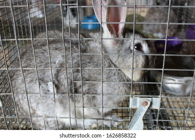 Gray rabbit in a cage