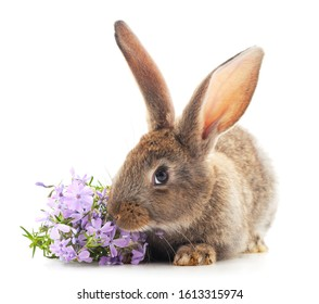 Gray rabbit with flowers isolated on a white background.