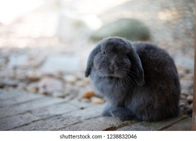 Gray rabbit on the farm
